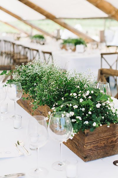 green potted plants arranged on a wedding reception table surrounded by glassware