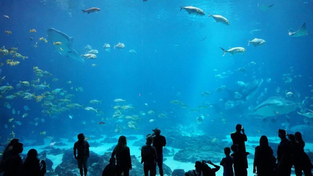 georgia aquarium proposal idea atlanta